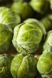 Rå gröna organiska Brussel - groddar Fotografering för Bildbyråer