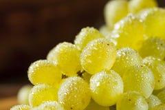 Rå gröna organiska Champagne Grapes Fotografering för Bildbyråer