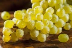 Rå gröna organiska Champagne Grapes Arkivfoto