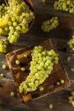 Rå gröna organiska Champagne Grapes Royaltyfri Bild