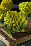 Rå gröna organiska Romanesco Royaltyfri Foto