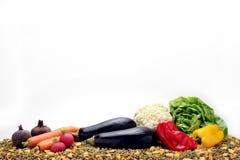 Rå grönsaker och hundmat Royaltyfria Foton