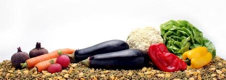 Rå grönsaker och hundmat Royaltyfria Bilder