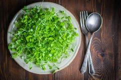 Rå groddar (microgreens) på träbakgrund Royaltyfri Foto