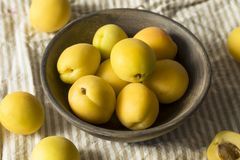 Rå gula organiska Angelcot aprikors Arkivfoton