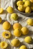 Rå gula organiska Angelcot aprikors Fotografering för Bildbyråer