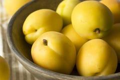 Rå gula organiska Angelcot aprikors Arkivbild