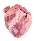 Rå hjärta Arkivbilder