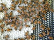 rå honung arkivbilder