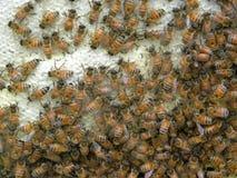 rå honung Royaltyfria Bilder