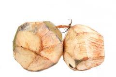 rå kokosnöt Royaltyfria Foton