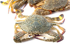 Rå krabba Royaltyfria Foton