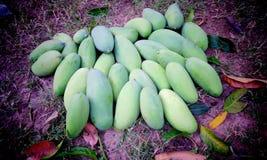 Rå mango Arkivfoto