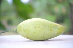 Rå mango i trädgård Arkivfoto