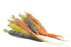 Rå morötter med olika färger Arkivbild