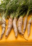 Rå morötter som var nya från trädgården, fodrade i enlodlinje bild Arkivbild