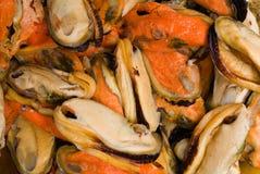 rå mussla arkivfoto