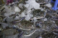 Rå nya krabbor på is Royaltyfri Foto