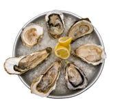 rå nya ostroner Fotografering för Bildbyråer