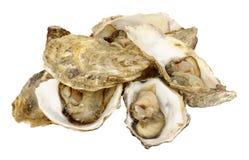 rå nya ostroner Arkivbild