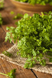 Rå organisk fransk persiljakörvel Fotografering för Bildbyråer