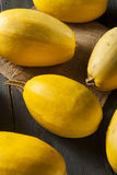 Rå organisk gul spagettisquash Fotografering för Bildbyråer