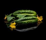 Rå organiska gurkor Arkivfoto