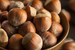 Rå organiska hela hasselnötter Arkivfoton