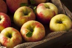 Rå organiska Honeycrisp äpplen royaltyfri fotografi