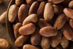 Rå organiska kakaobönor arkivbilder