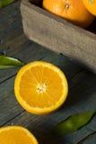 Rå organiska orange apelsiner Royaltyfri Bild