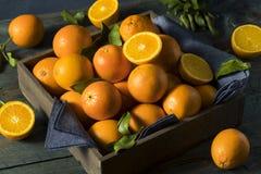 Rå organiska orange apelsiner Fotografering för Bildbyråer
