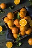 Rå organiska orange apelsiner Royaltyfri Fotografi