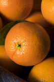 Rå organiska orange apelsiner Arkivfoto