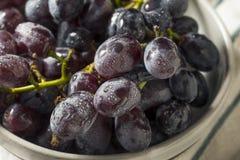 Rå organiska purpurfärgade druvor royaltyfri foto