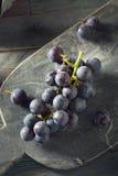 Rå organiska purpurfärgade harmonidruvor Royaltyfri Bild