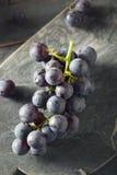 Rå organiska purpurfärgade harmonidruvor Royaltyfria Foton