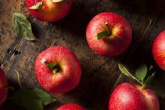 Rå organiska röda Gala Apples arkivfoto