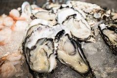 Rå ostron med på is Royaltyfri Foto