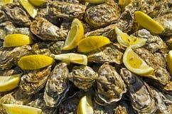 Rå ostron som dekoreras med stycken av citronen arkivfoto