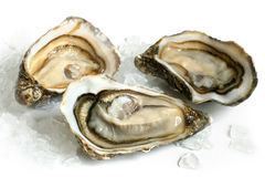 Rå ostroner med is royaltyfri fotografi