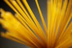 Rå pasta på lantligt fotografering för bildbyråer