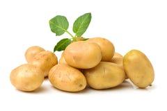 rå potatis royaltyfria bilder