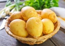 rå potatis royaltyfri foto