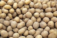 Rå potatisar Arkivbild