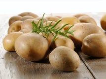 Rå potatisar och rosmarin Royaltyfria Foton
