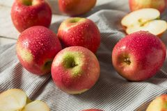 Rå röd organisk rosa dam Apples arkivbild