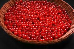 Rå röd vinbär på en svart bakgrundsnärbild Smakliga röda bär i en träkorg Organiska bär för strikt vegetarianfrukost Royaltyfri Fotografi