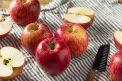 Rå röda organiska Kiku äpplen royaltyfria foton