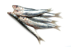 rå sardines Royaltyfria Foton